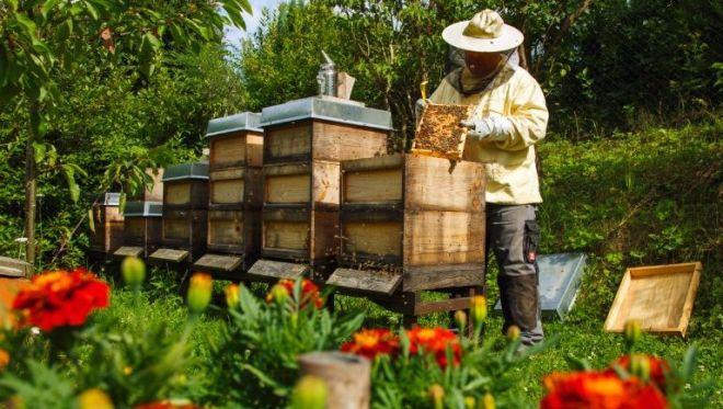 Αποτέλεσμα εικόνας για προστασίας των μελισσών από τους διενεργούμενους ψεκασμούς