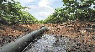 Το... νερό νεράκι λένε φέτος οι καλλιεργητές στις περισσότερες περιοχές της  χώρας